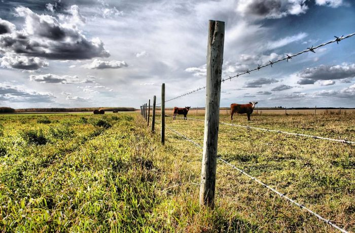 3 row barbed wire livestock fence