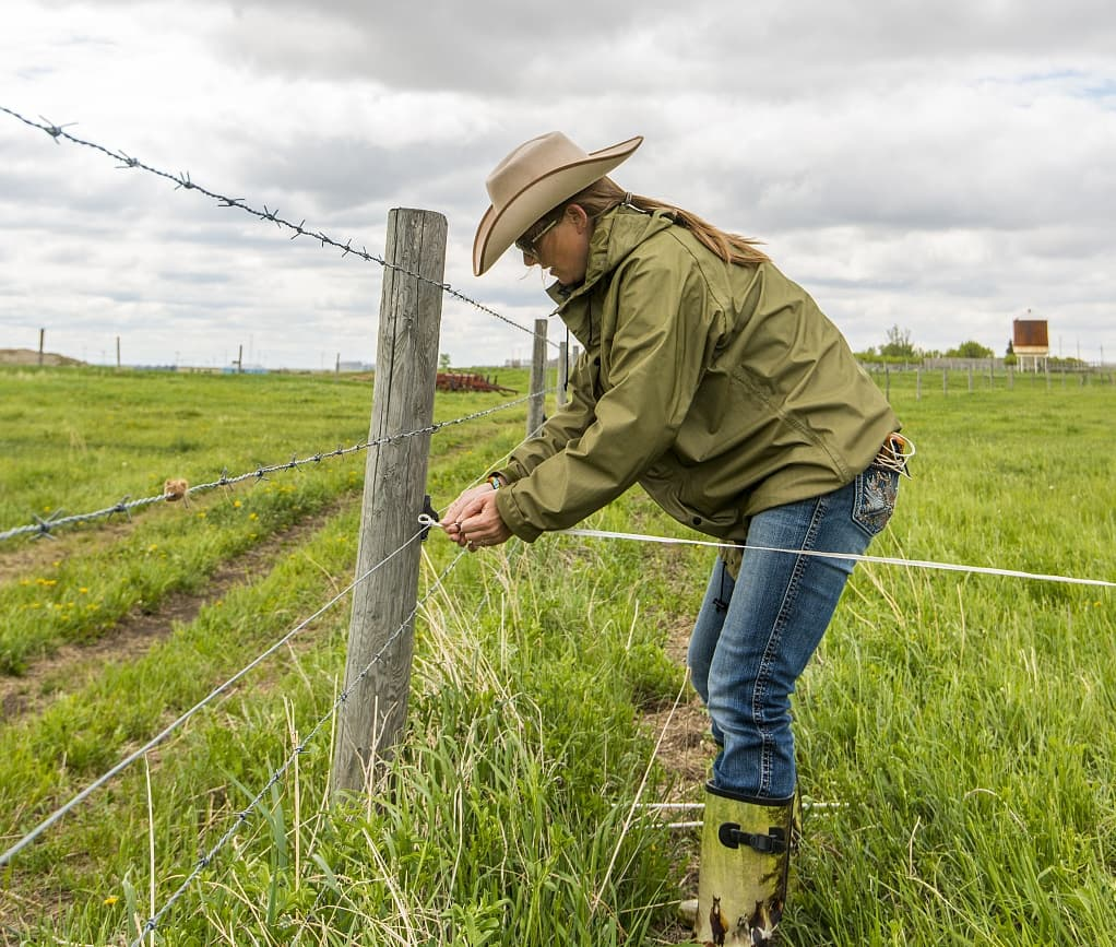 Barbed Wire For Livestock Farm